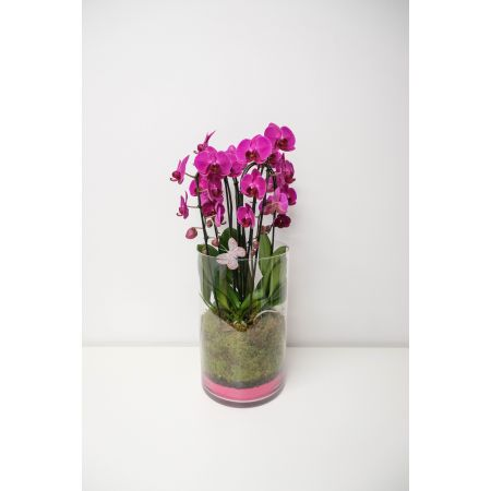 Coupe Orchidee in glas